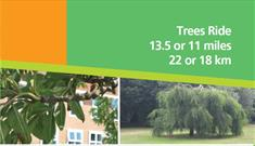 Trees Ride Banner