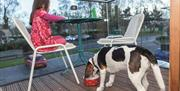 Children and pets welcome - Lodge at Solent
